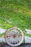 Antique wood cart wheel with green leaves Stock Photos