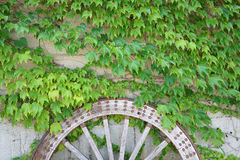 Antique wood cart wheel with green leaves Royalty Free Stock Photo