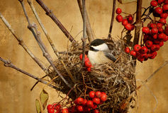 Antiqued Vogel innest. Stockfotos