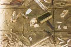 An antiquities excavation site. tools and exhibits found.  royalty free stock photos
