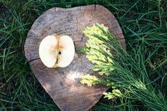 Antirrino e una metà della mela Fotografia Stock