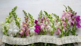 Antirrinum na białym drewnianym tle Rocznik bawełny koronka w bocho stylu Fotografia Stock
