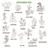 Antispasmodic herbs. Hand drawn set of medicinal plants Royalty Free Stock Photography
