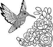 Antistress kolibri Bild för zentanglefärgläggningar för illustrationsköld för 10 eps vektor Arkivbild