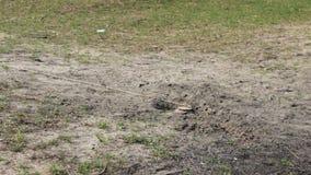 Antitankmijnen bij en zand die installeren doen ontploffen stock footage