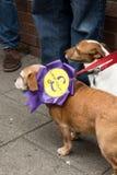 Antiukip-honden met rozet Stock Afbeeldingen