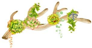 Antler акварели с succulent Стоковые Изображения