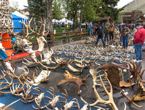 Antler auction. Elk antler auction at the 2013 ELKFEST in Jackson Hole, Wyoming Royalty Free Stock Photos