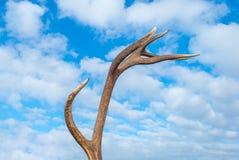 Antler dei cervi in un cielo nuvoloso blu fotografia stock