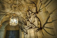 Antler horns on the wall. Horns on the wall at Chateau d Usse, France Stock Photography
