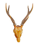 Antler isolate on white Royalty Free Stock Images