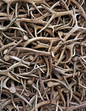 Antler Pile Stock Images