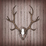 Antler on a rustic wooden wall Stock Photo