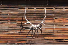 Antler on a wall Stock Photography