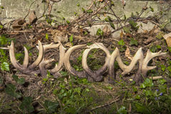 Antler Welcome Royalty Free Stock Photography