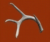 Antler. Whitetail deer antler on rusty patterns background Royalty Free Stock Photography