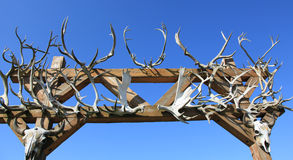 Antlers карибу Стоковые Фотографии RF