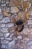 Antlers лося на стене Стоковые Изображения RF