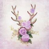 Antlers оленей с цветками бесплатная иллюстрация