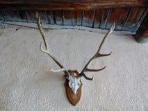 Antlers оленей Стоковые Фото