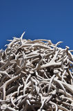 Antlers Royalty Free Stock Photo