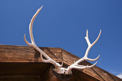 Antlers Stock Photo