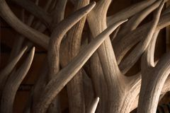 Antlers Background Texture Points and Beams. In Soft Light royalty free stock photography