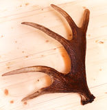 Antlers deer horns elk wood Royalty Free Stock Image