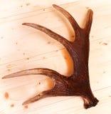 Antlers deer horns elk wood. Hunted royalty free stock image