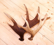Antlers deer horns elk wood Stock Photography