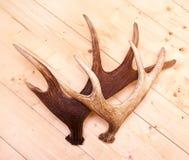 Antlers deer horns elk wood. Hunted Stock Photography