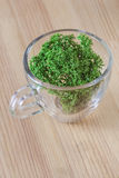 Antlers moss. Glass cup of green antlers moss on the wooden desk surface Royalty Free Stock Image