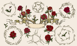 Antlers and peonies entwined ribbon. Vector illustration. Hand drawing on a graphic tablet.Antlers and peonies entwined ribbon Royalty Free Stock Images