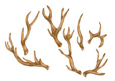 Antlers Royalty Free Stock Images