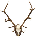 Antlers of a stag Royalty Free Stock Image