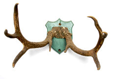 Antlers on white 2 Royalty Free Stock Images