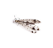 Antlion Stock Images