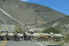 Antofagasta de la Sierra. Road to Antofagasta de la Sierra. Hard tour through valleys, rivers and deserts. February 2015 Belen, Catamarca, Argentina stock images