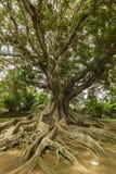 Antonio Borges Botanical Garden dans Ponta Delgada photographie stock libre de droits