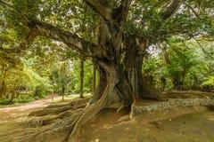 Antonio Borges Botanical Garden dans Ponta Delgada photographie stock