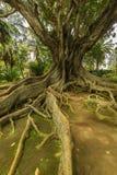 Antonio Borges Botanical Garden dans Ponta Delgada photos stock