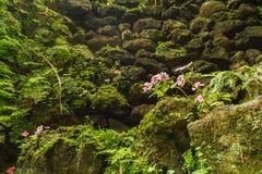 Antonio Borges Botanical Garden in Ponta Delgada immagini stock libere da diritti