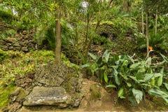 Antonio Borges Botanical Garden in Ponta Delgada fotografia stock