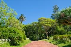 Antonio Borges Garden nella città di Ponta Delgada, isola di Miguel del sao, fotografia stock libera da diritti