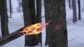 Antorcha del fuego en una madera durante invierno metrajes