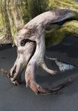 Antrieb-hölzerner Kopf auf grauem Sand Stockfoto