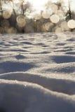 Antriebe des Schnees im Wald Stockfotos