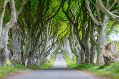 The Dark Hedges. Antrim/N. Ireland - May 30, 2015: Romantic, atmospheric, tunnel-like avenue of intertwined beech trees, planted in the 18th-century in royalty free stock photo