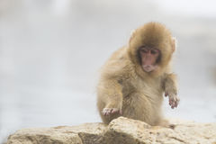 Antropomorfismo: Macaco surpreendido da neve do bebê Imagem de Stock