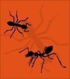 Ants. Illustration of ants on orange background stock illustration